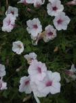 きれいな花